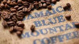 Jamaica Seeks Chinese Funding to Expand Coffee Industry