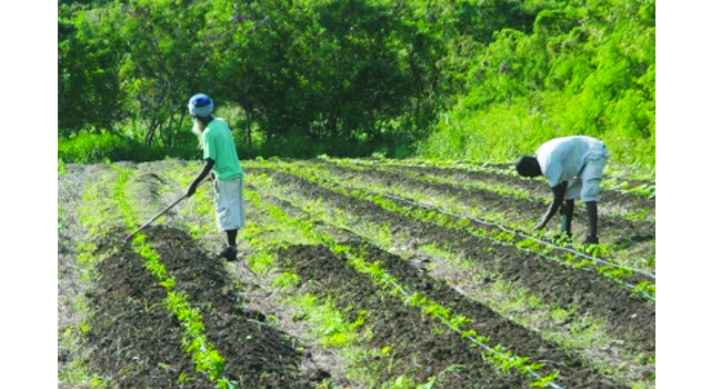 Allow the farm workers to return home