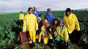 Time to fix the farm workers programme