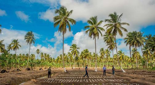 Coconut company to list on Guyana Stock Exchange