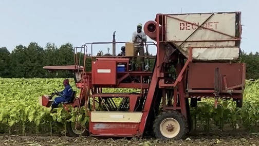 Trinidadian farm workers 'in limbo'